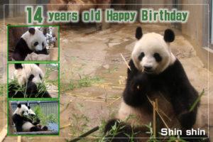 7月3日は、シンシンの誕生日