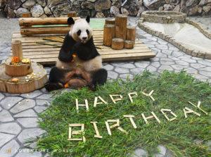 「良浜」が20歳の誕生日を迎えました!