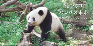 花ひらけパンダの未来──ありがとうシャンシャン