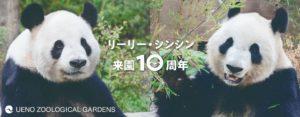 2011年2月21日、リーリーとシンシンが上野動物園に来園しました。